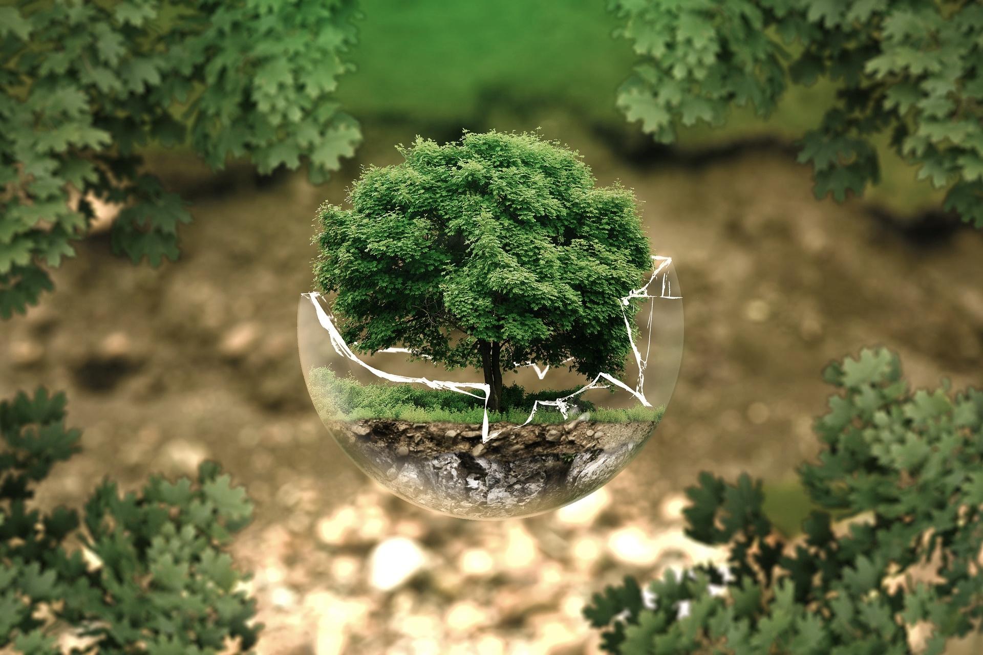 Träd i glaskupa. symboliserar miljö