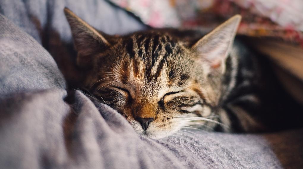 katt som sover och lämnar katthår på soffan