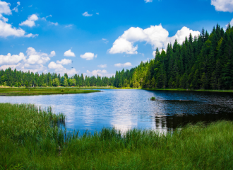 Vackert landskap i Sverige, skog och sjö